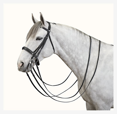 Dressage bridle -
