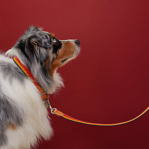 Rocabar dog leash